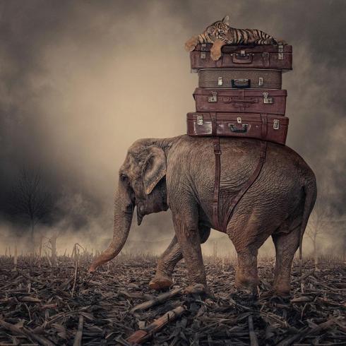 surreal-photo-manipulations-caras-ionut-10