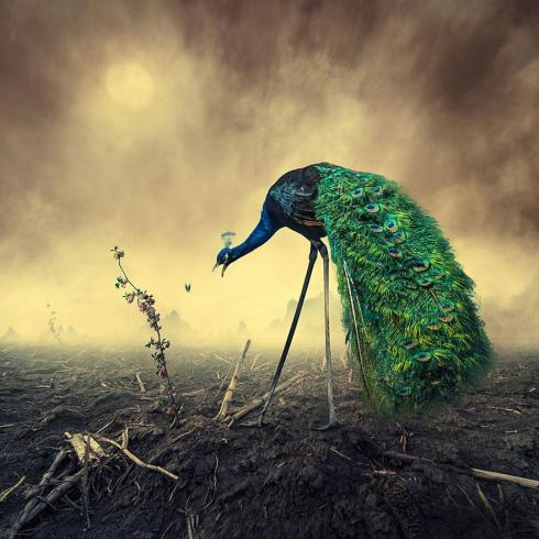 surreal-photo-manipulations-caras-ionut-6