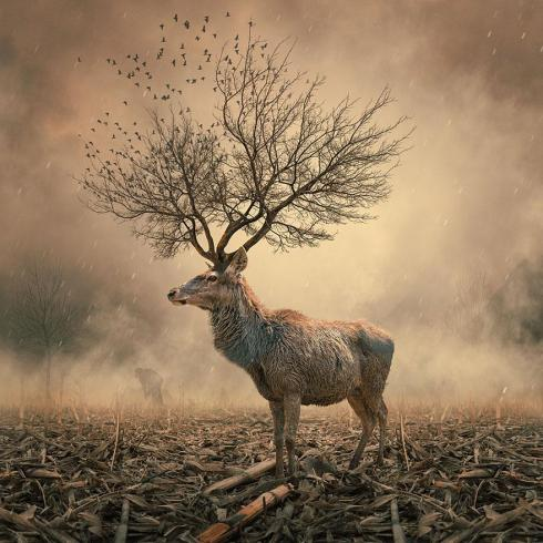 surreal-photo-manipulations-caras-ionut-7